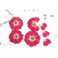 Cheap Red Rose Real Pressed Flowers Diameter 3 CM For Valentine'S Day Holidays wholesale