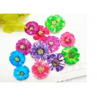 Cheap Small Daisy Natural Real Pressed Flowers True Plants Specimens For DIY Photo Frame wholesale