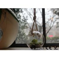 Cheap Clear Glass Hanging Terrarium / Hanging Glass Plant Holders Anti Corrosion wholesale