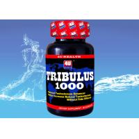 Cheap Tribulus 1000 --- Tribulus Terrestris Capsule for Natural Testosterone , Sports Nutrition Supplements for Bodybuilding wholesale