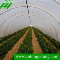 Tunnel Greenhouse,longyoung