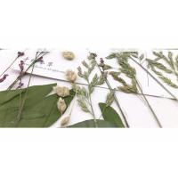 Cheap Original Wild Grass Weed Large Pressed Flowers For Aroma Wax Candles wholesale