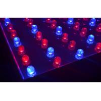 Cheap 5050SMD Led Growing Lights 182leds Red / Blue High Efficiency wholesale
