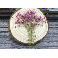 Cheap DIY Handmade Long Dried Flowers , Babys Breath Materials Real Dried Flowers wholesale