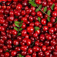 Cheap Anti Aging Organic Food Ingredients Freeze Dried Cranberry Powder Prevents Scurvy wholesale