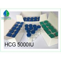 Buy cheap Injectable Gonadotropin Human Growth Hormone Peptide HCG 5000iu/ Vial from wholesalers
