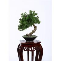 Cheap Botanical Mix Decorative Pine Trees , 40cm Faux Bonsai Tree Nature Inspired wholesale