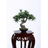 Cheap 28cm Bonsai Pine Tree 100% Botanically Accurate Structure Traditionally Bright Spot wholesale