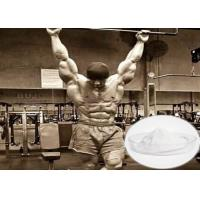 Effective Raw Steroid Powder Tibolone Accetate For Muscle Gainning 5630-53-5