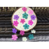 Cheap Handmade Dye Verbena Real Pressed Flowers Color Optional For Specimens Plant wholesale