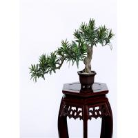 Cheap Buddhist Bonsai Pine Tree 25*52cm No Watering Trimming Timeless Beauty wholesale