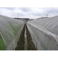 Cheap Anti Insect Net 50x35mesh,growing and agriculture using,greenhouse using  50-140g/m2  0.5m-6m width   black,white wholesale