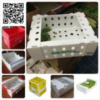 Cheap 5kgs 10lbs pp corflute coroplast vegetable fruit packaging box wholesale