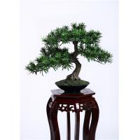 Cheap Delightful Artificial Plants Bonsai , Unique Bonsai Trees Cedrela Odorata Exotic Display wholesale