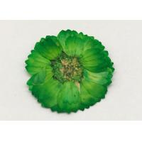 Cheap Dye Green Dried Flowers , Dried Daisy Flowers For Epoxy Recycled Flowers wholesale
