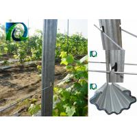 Cheap 7FT Height Metal Plant Support Stakes , Hot Dip Galvanised Steel Vineyard Posts wholesale