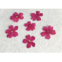 Cheap Wedding Real Pressed Flowers For Specimen , Verbena Handmade Floral Dried Flower wholesale