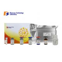 Cheap Customized This sandwich kit is High Precision Laboratory Research Rat Glial Fibrillary Acidic Protein ELISA Assay Kit wholesale