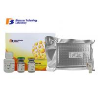 Cheap 96 Wells Mouse ELISA Kit Apelin Sandwich 3.11pg/Ml Sensitivity 2-8°C Storage wholesale