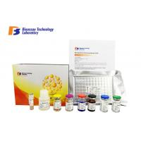 Cheap Strong Precision Rat ELISA Kit 96 Wells With MSDS / CE Certification E0711Ra wholesale
