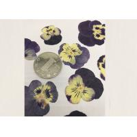 Cheap Purple Pansy Real Pressed Flowers True Plant Material For Press Picture Ornaments wholesale