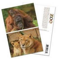 Cheap PLASTIC LENTICULAR cheap price 3D postcards 3D animal post cards with lenticular sheet material wholesale