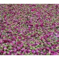 Cheap Gansu excellent products Kushui Rosebud wholesale