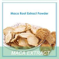 natural herbs Maca extract powder/maca root extract powde