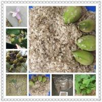 Cheap Kiri seeds with phyto certificate wholesale