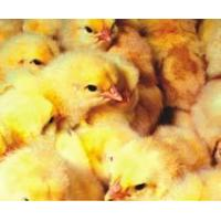 Biovit 3% TP for fattening chickens