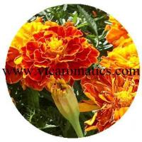 Cheap Floral wholesale