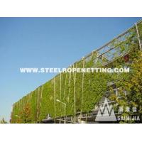 Cheap Stainless Steel Cable Mesh Green plant climbing rope netting wholesale