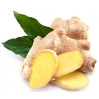 Cheap Natural Essential Oil 【Product Name】Ginger Essential Oil wholesale