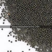 Buy cheap Steel shot from wholesalers